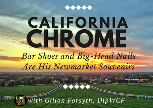 California Chrome hoofcare farrier vet interview