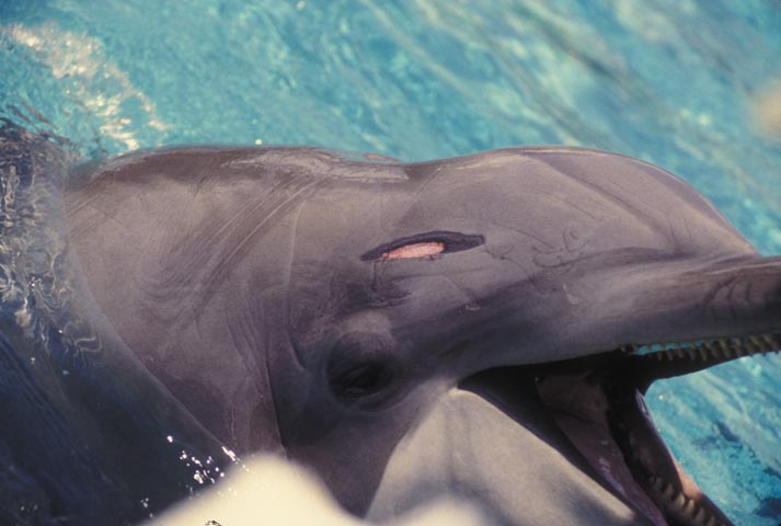 Don´t Swim with Captive Dolphins in Mexico