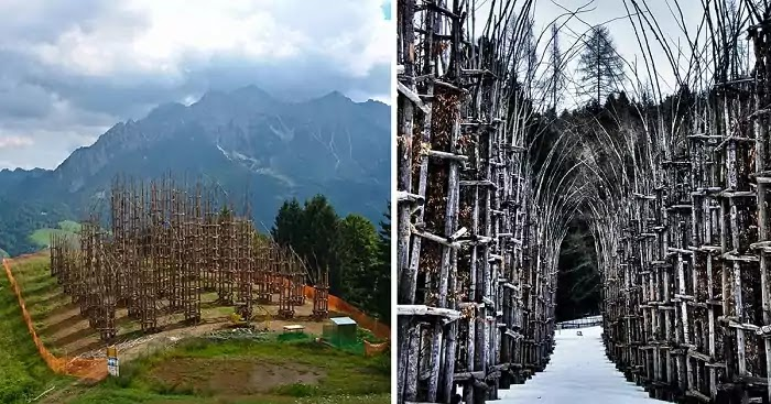 Mind-Blowing Photos Of Cathedral Made Of Trees