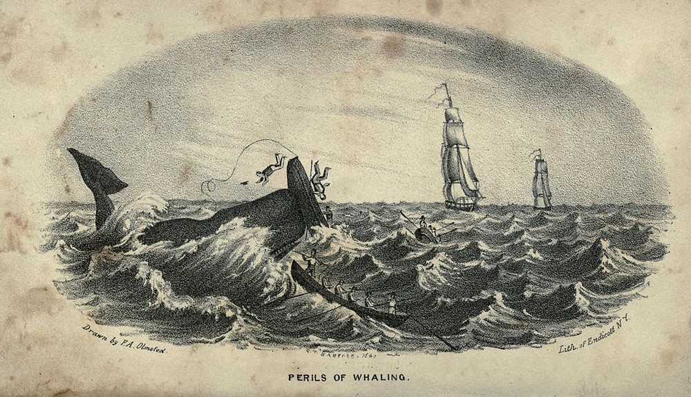 Perils of Whaling
