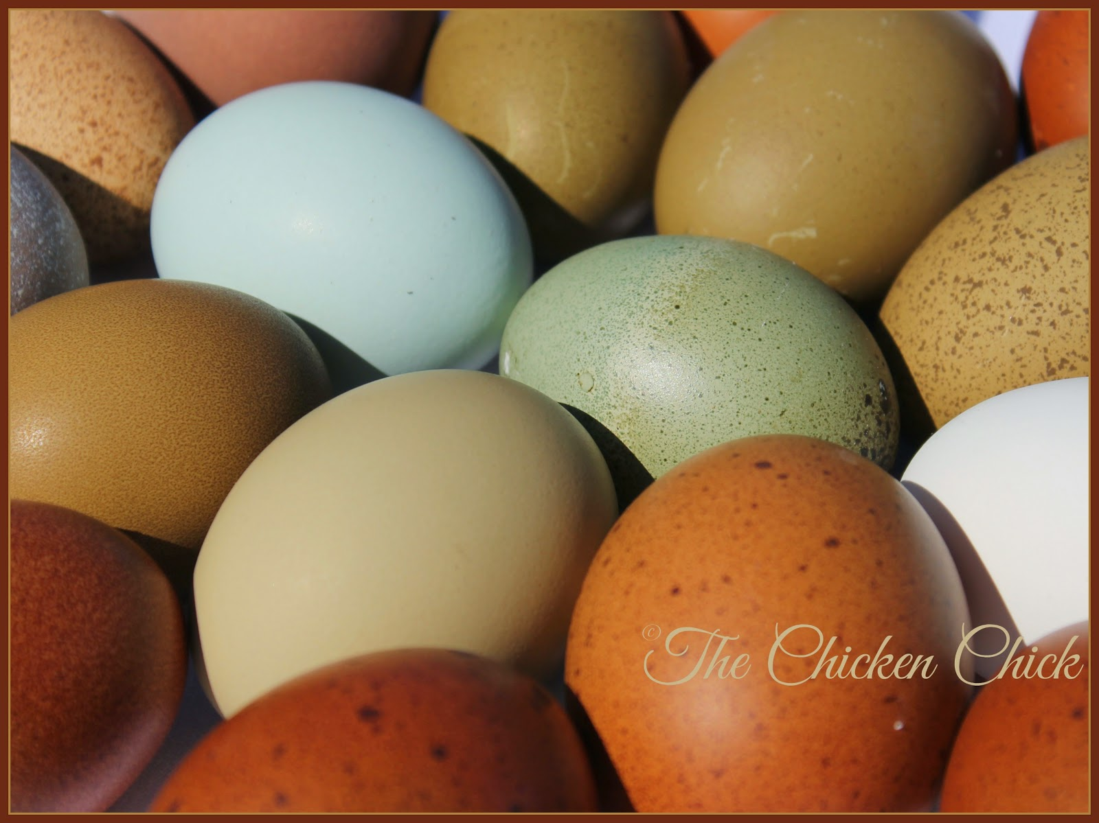 The color of an egg is determined by the hen's breed/genetics. Eggs can be white, brown, blue or any combination of those colors.