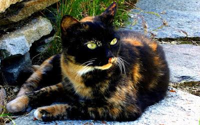 Cute Cats Kitty Pets 23