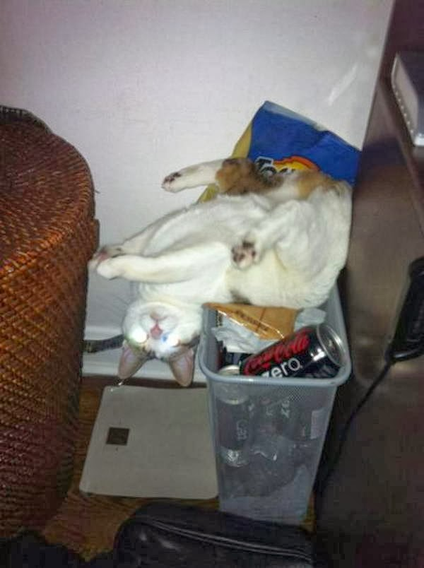 Funny cats - part 90 (40 pics + 10 gifs), cat playing around in a trash can