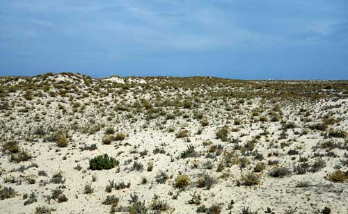 Ilha da Armona, Olhao, Algarve.