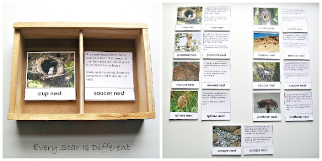 Bird Nest Match Up Activity with Free Printable