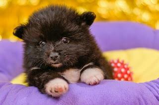 Cara Merawat Anak Anjing Baru Lahir
