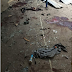 See photos from the University of Maiduguri mosque bomb attack
