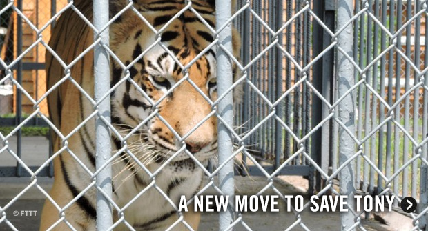 Don Lichterman: We Must Deal with Getting Tony The Tiger