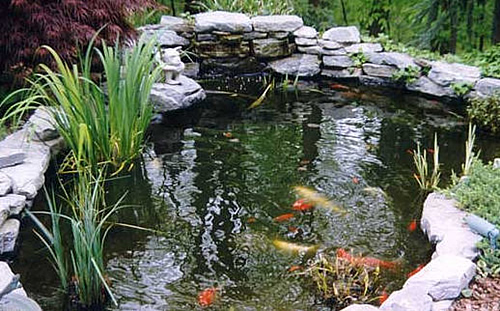 Arte y jardiner a estanques y jardines acu ticos for Nombre de estanque pequeno para tener peces