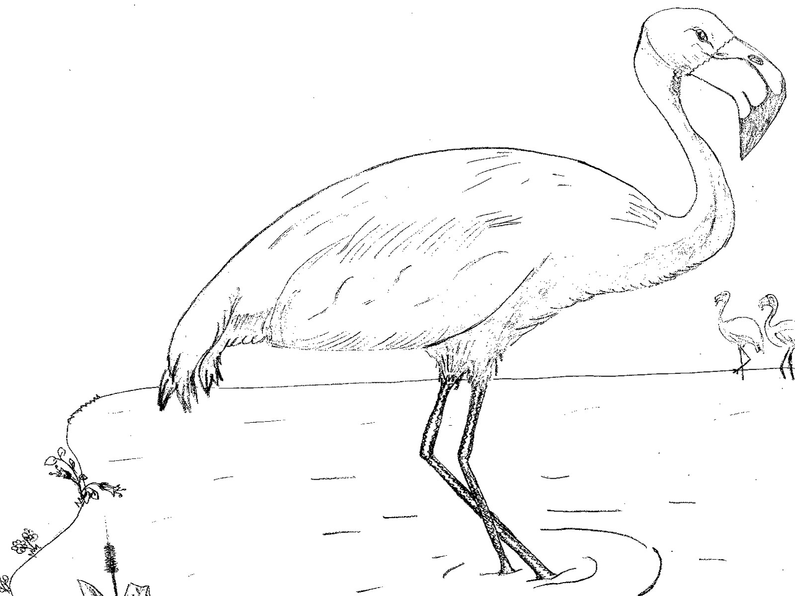 Flamingo nature adventure for Flamingo coloring pages