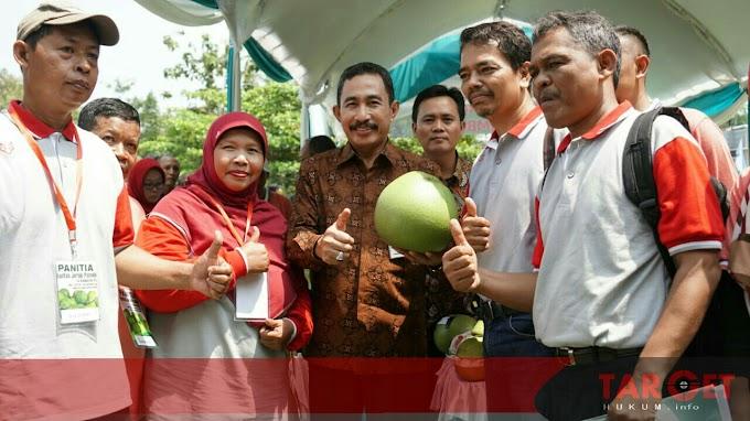 101 Peserta Ramaikan Kontes Jeruk Pamelo Perdana di Desa Bageng