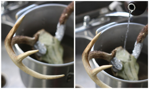 How to Clean and Wall Mount Deer Antlers | 17 Apart