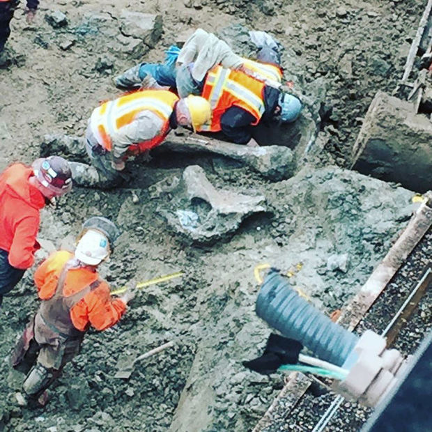 Mammoth bones unearthed on Oregon State football field