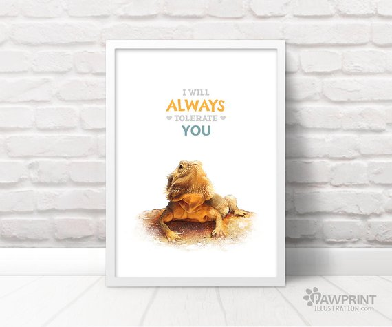 an illustration of a bearded dragon with the text 'I will always tolerate you' above it, from pawprint illustration