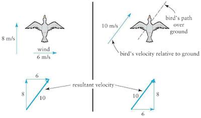 Repasos de Harold: Conceptual Physics Final Test Review