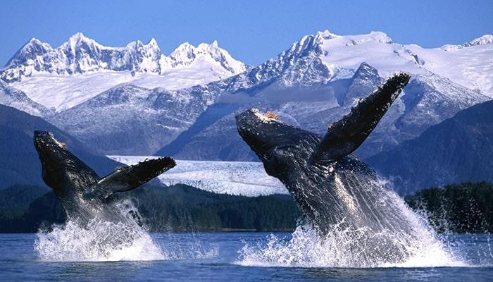 Аляска, отдых и киты
