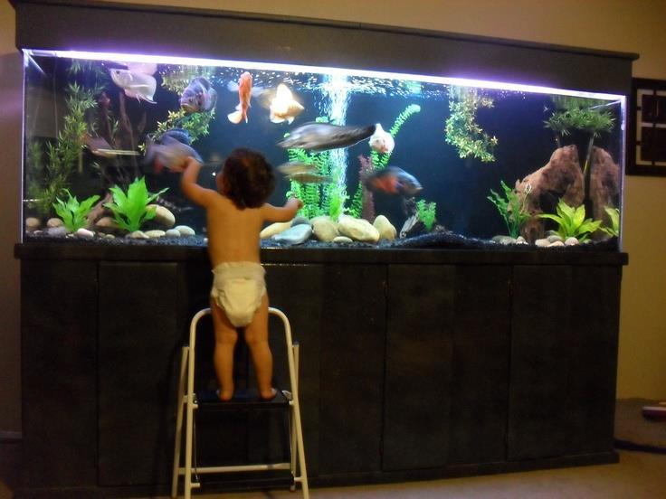 đứa bé đứng trên ghế để ngắm hồ thủy sinh