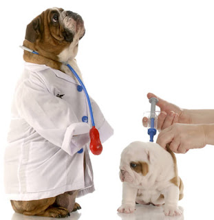 Vacinando seu filhote