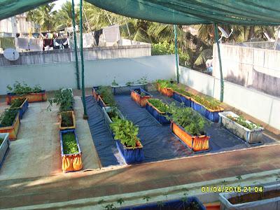 Organic Farming வீட்டு தோட்டம் Pasumainayagan