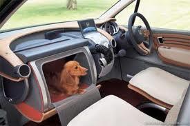 cachorros no carro