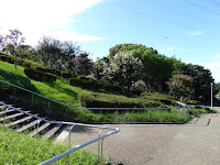 山田池公園のサルスベリ