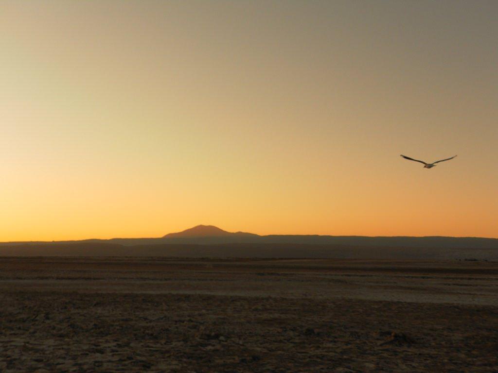 Laguna Tebinquiche no Atacama