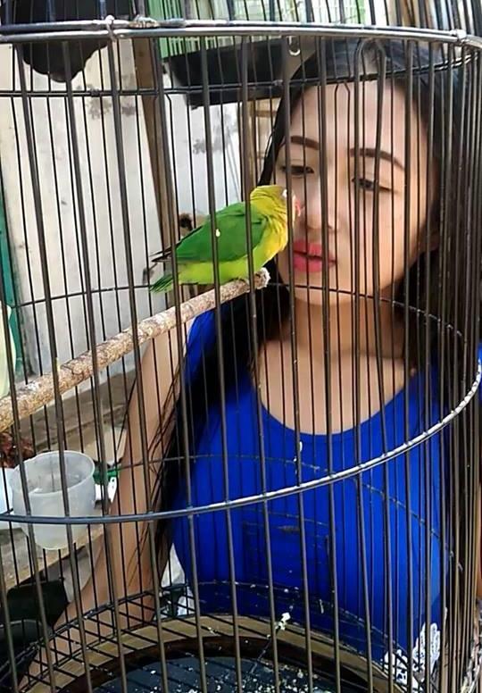 terapi MKMK agar lovebird birahi dan ngekek panjang