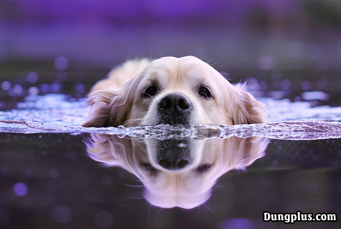 Chú chó bơi qua sông