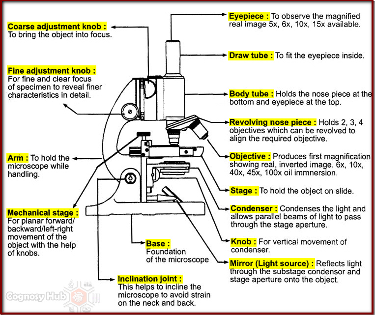 Cognosy hub compound microscope ccuart Images