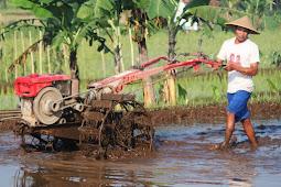 Istilah Istilah Dalam Pertanian Padi