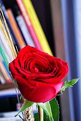 Rosa i llibres per Teresa Grau Ros a Flickr