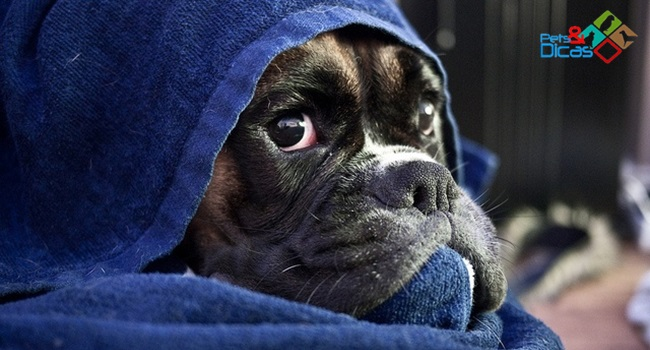 Cuidados com o cão no frio