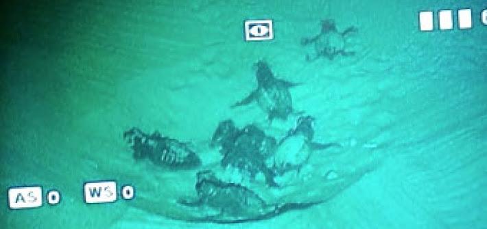 Castellaneta: schiuse prime uova delle tartarughine pugliesi (VIDEO)