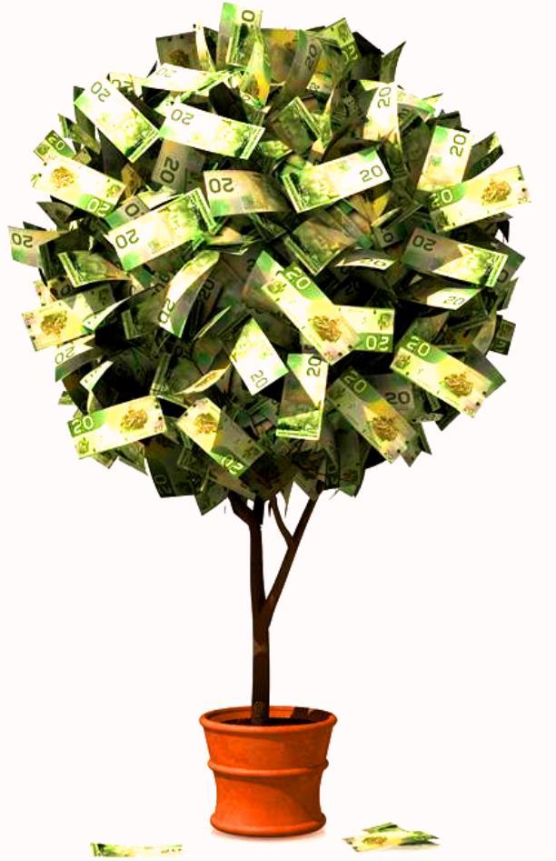 5 plantas para atraer la prosperidad y el dinero a tu vida - Como atraer dinero y buena suerte ...