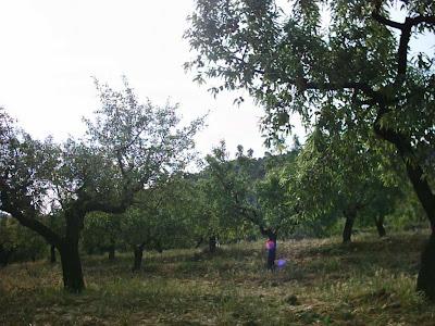 La pileta, camino, pantano de Pena, embalse, finca, almendros, olivos 12