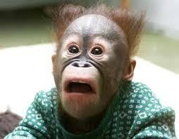 Gambar Lucu Hewan monyet