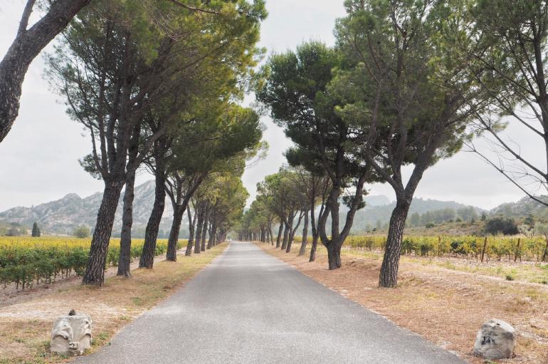Domain de la Vallongue - AOP des Baux de Provence