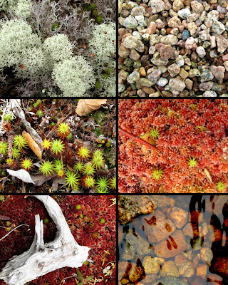 close up photography, nature, moss, rocks, water
