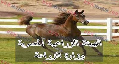 الهيئة الزراعية المصرية - وزارة الزراعة - وظائف مصرية