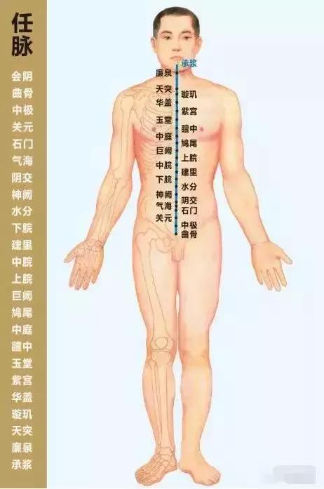 任脈、督脈、衝脈、帶脈,四脈解析