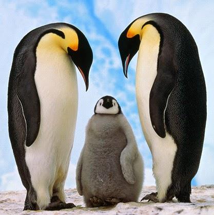 pinguin setia terhadap pasangannya