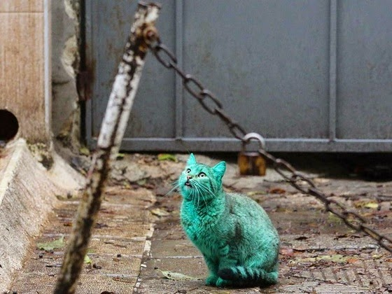 green cat varna