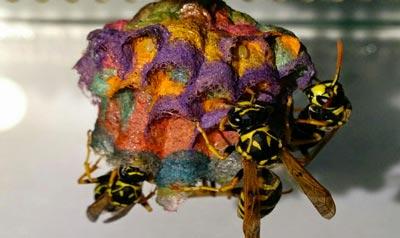 sarang tawon Serangan Hewan Paling Mematikan di Dunia