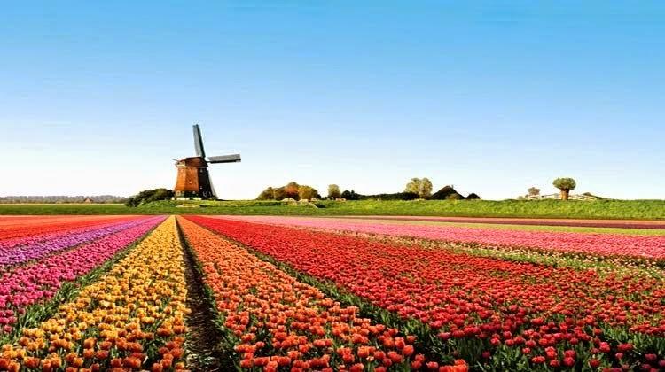 keukenhof,wisata belanda,taman bunga,tulip,wisata