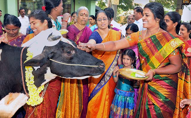 Some interesting facts about the Hindu festival Pongal ...