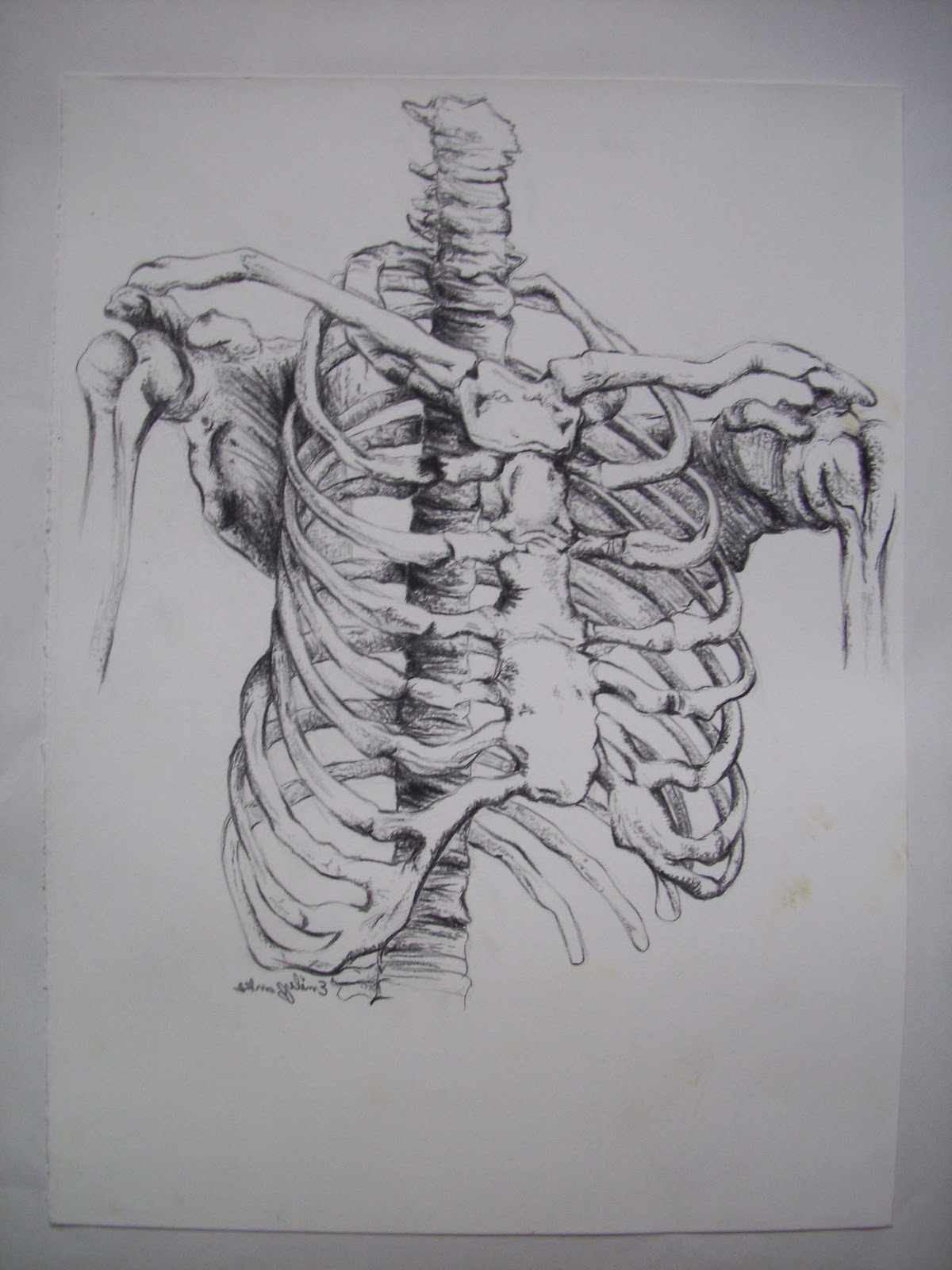 Emily Banks' Art And Animation: Anatomy And Life Drawing