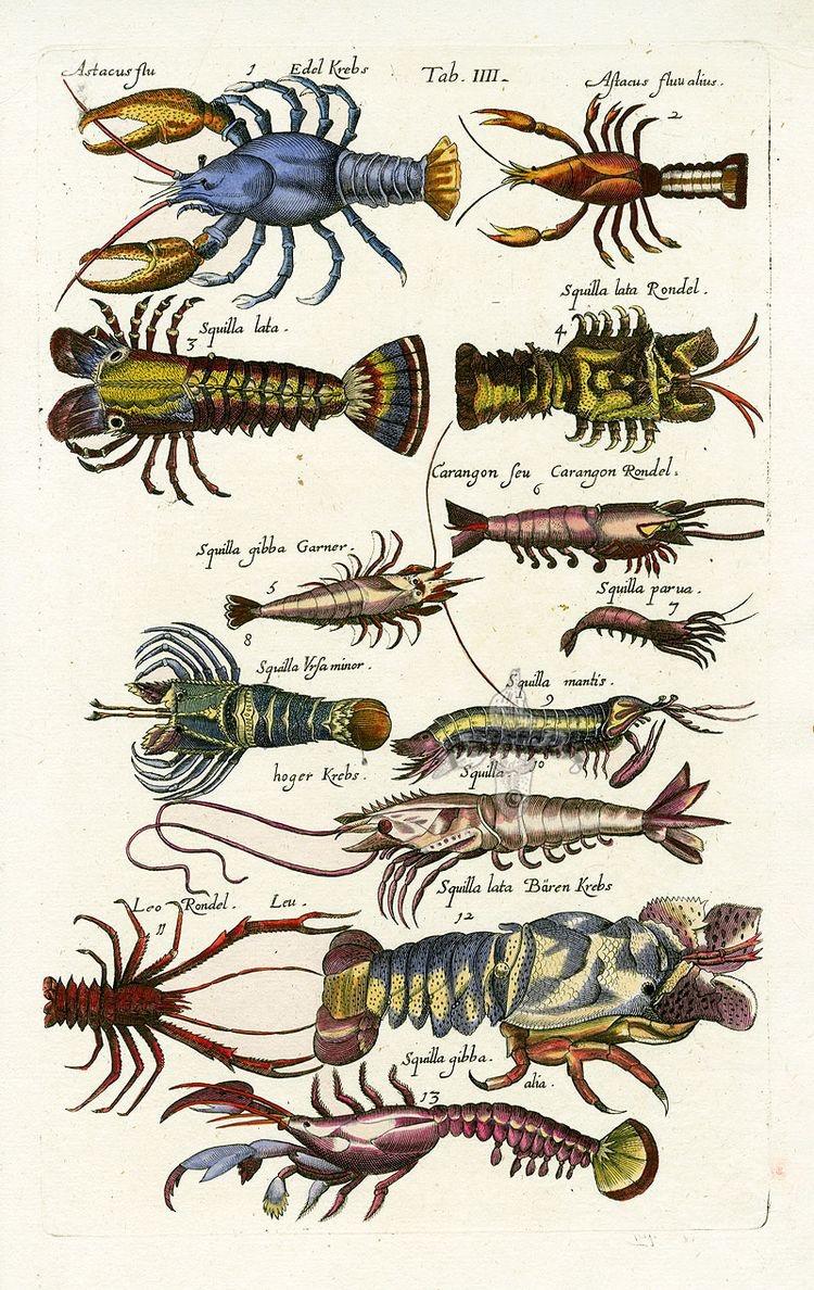 #Crustáceos