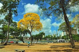 Parque de João Pessoa na primavera florida.