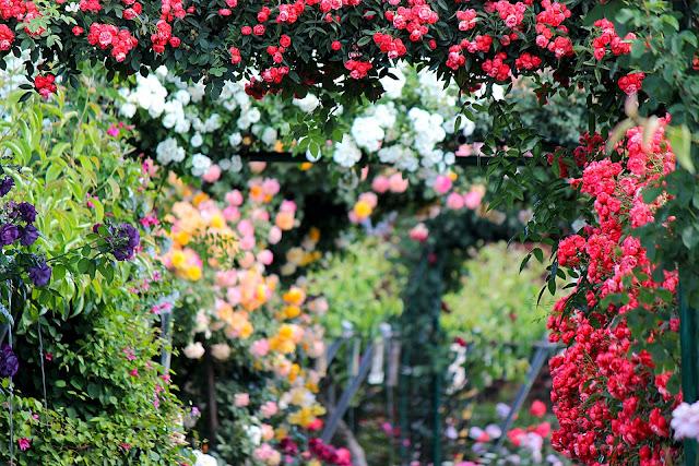 Passeggiando tra le rose