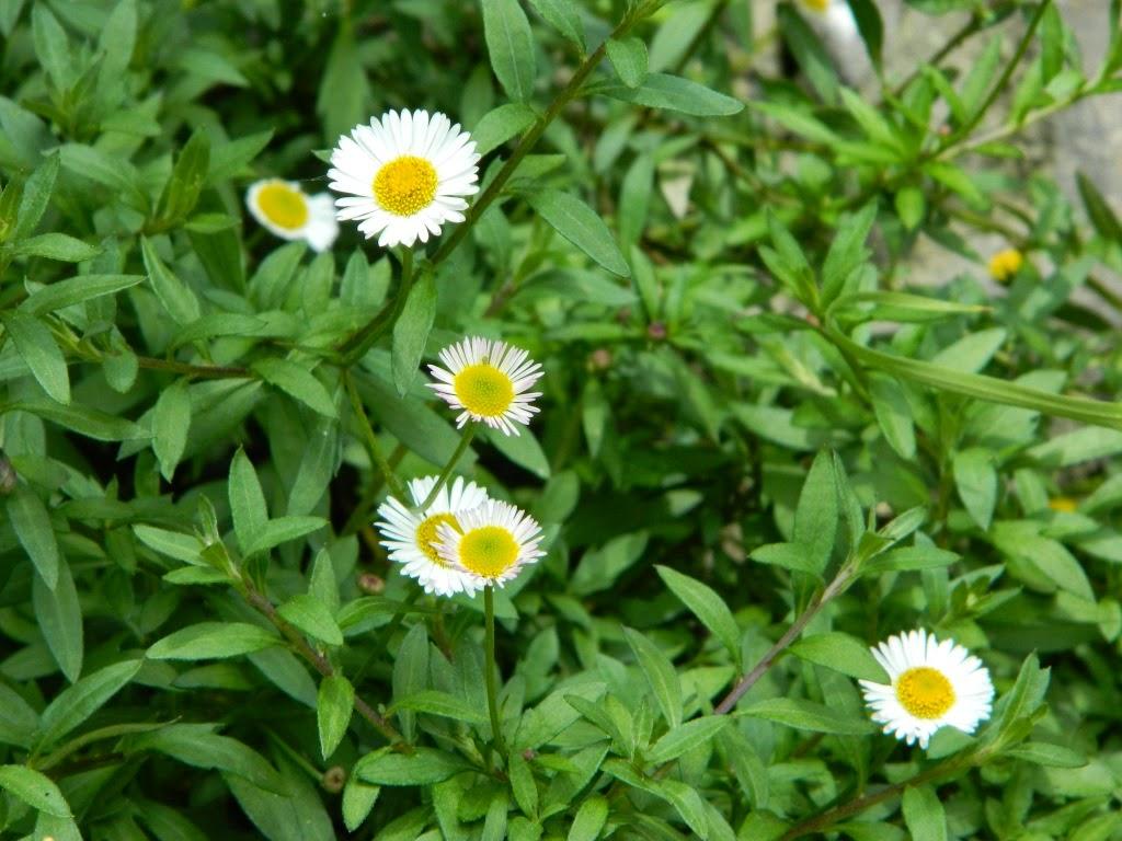 Flowers Memory Blowers Vivek Patwardhan
